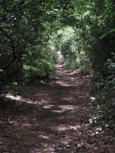 The trail I walk by the river