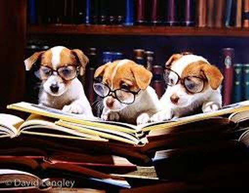dogs reading southern novels