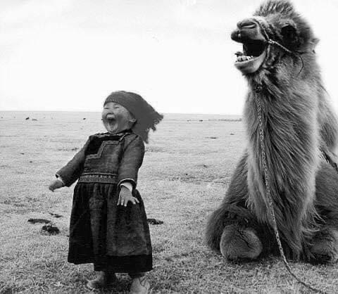 girl and camel laughing