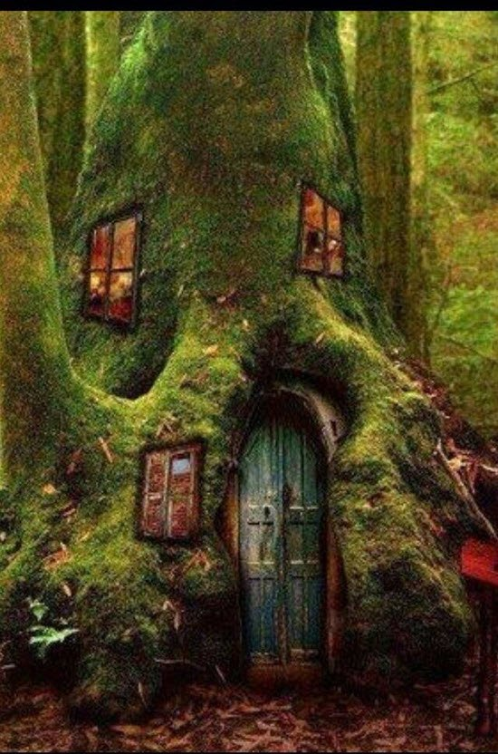 house in a tree trunk