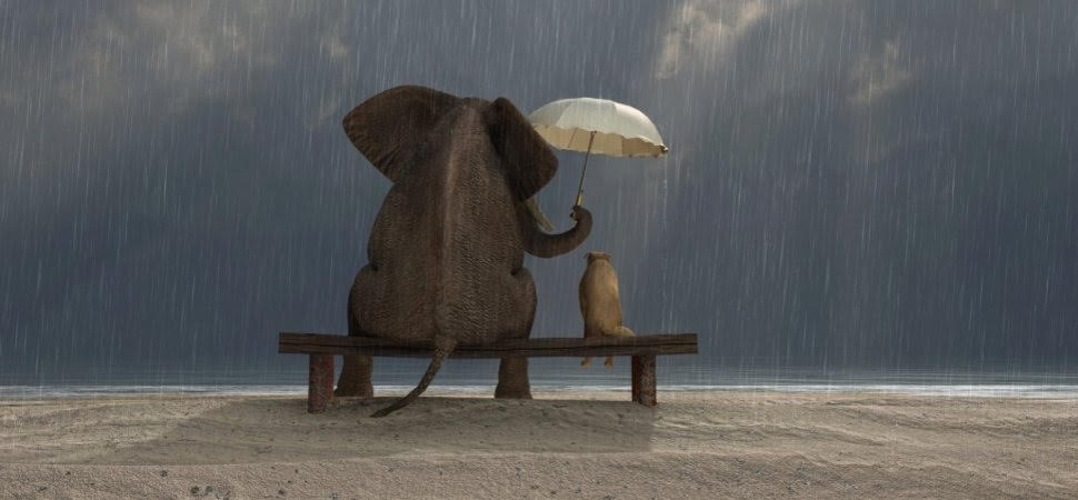 elephant and dog in the rain