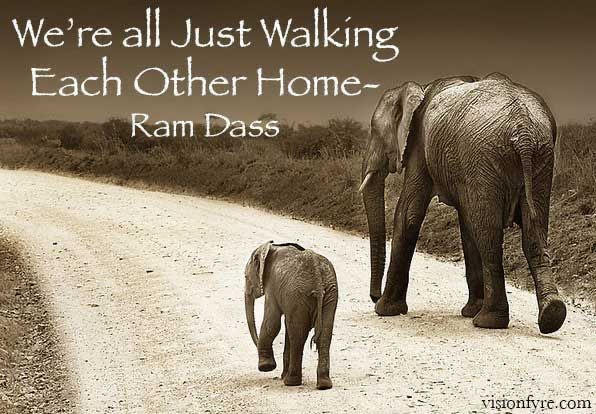 two elephants on road